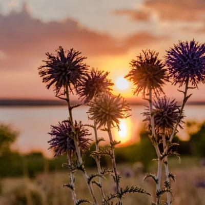 Tour to Bessarabia, Ukraine. The beauty of nature. August 2019.
